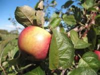 Les 2 ingrédients essentiels pour porter du fruit.
